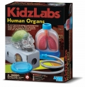 Órganos humanos (Human Organs)