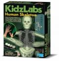Esqueleto humano fluorescente (Glow Human Skeleton)